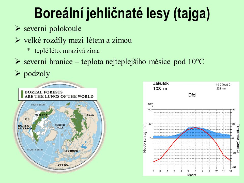 Boreální jehličnaté lesy (tajga)
