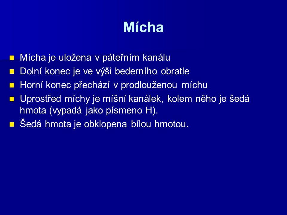 Mícha Mícha je uložena v páteřním kanálu
