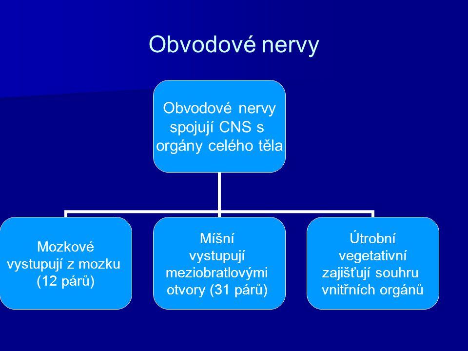 Obvodové nervy