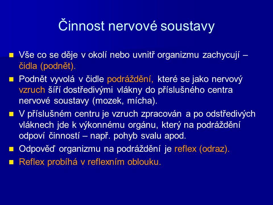 Činnost nervové soustavy
