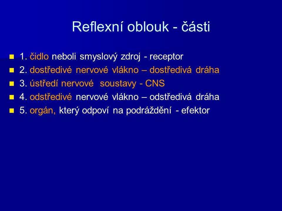 Reflexní oblouk - části