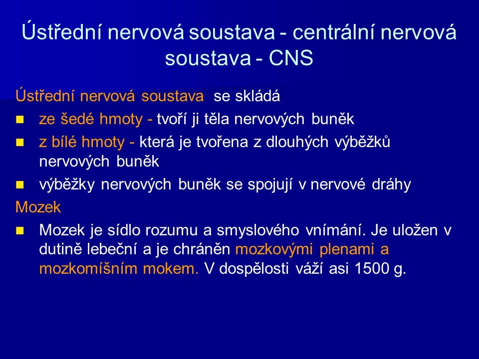 Ústřední nervová soustava - centrální nervová soustava - CNS