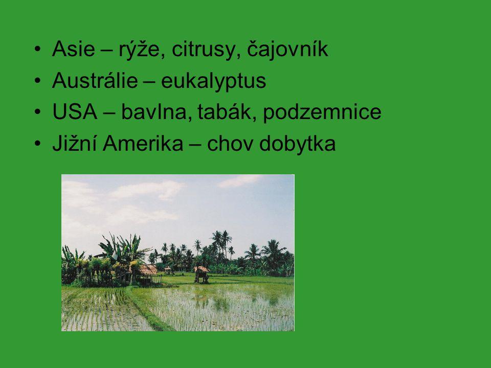 Asie – rýže, citrusy, čajovník