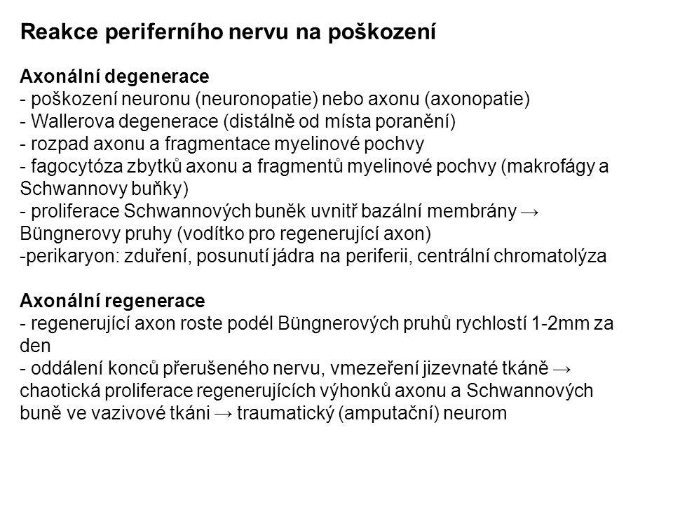 Reakce periferního nervu na poškození