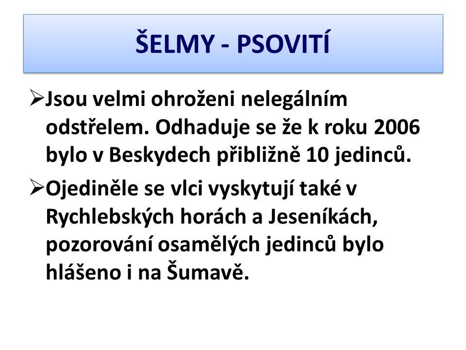 ŠELMY - PSOVITÍ Jsou velmi ohroženi nelegálním odstřelem. Odhaduje se že k roku 2006 bylo v Beskydech přibližně 10 jedinců.