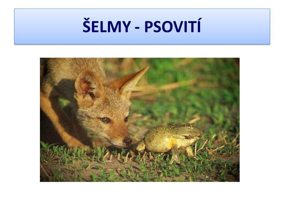 ŠELMY - PSOVITÍ