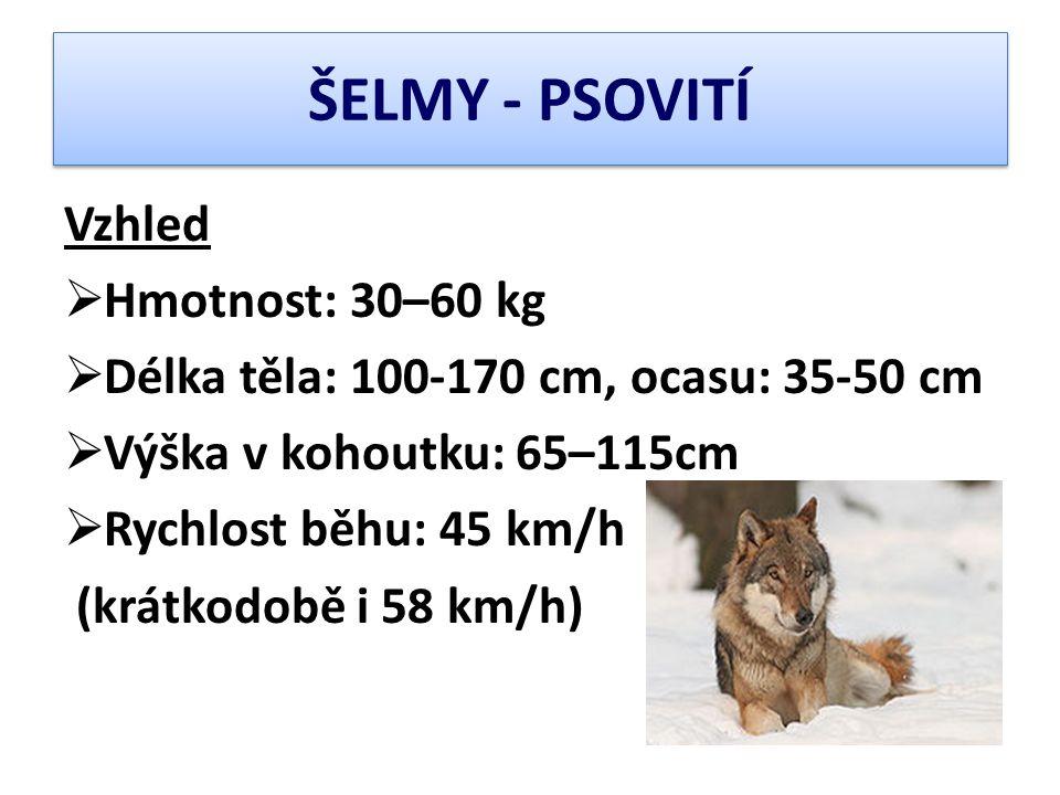 ŠELMY - PSOVITÍ Vzhled Hmotnost: 30–60 kg