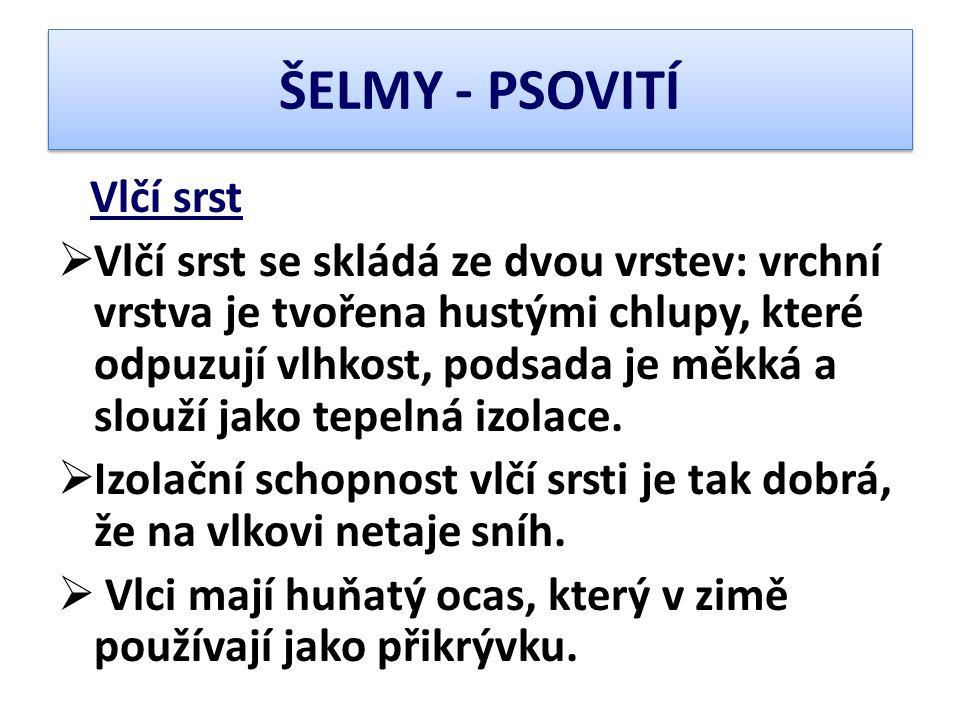 ŠELMY - PSOVITÍ Vlčí srst