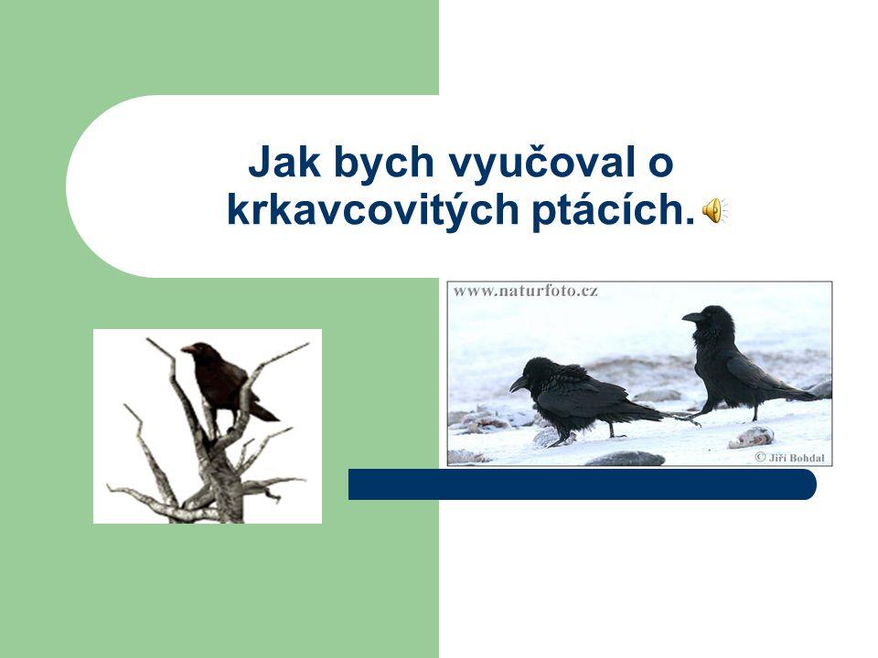 Jak bych vyučoval o krkavcovitých ptácích.