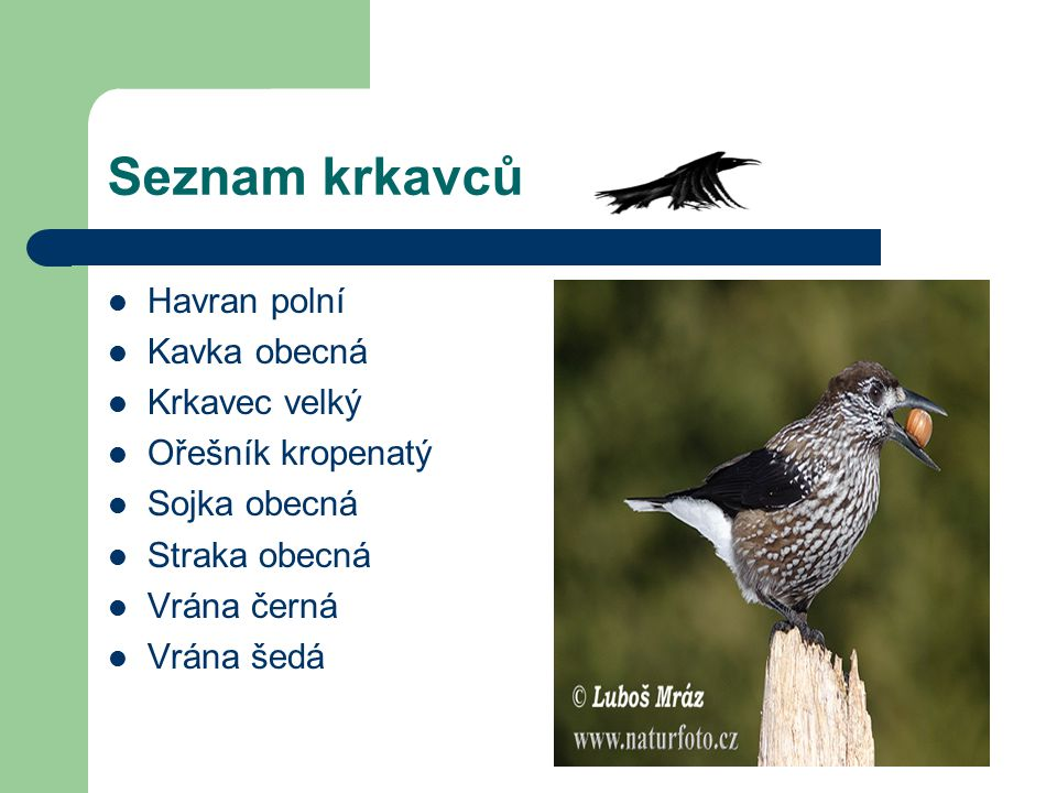 Seznam krkavců Havran polní Kavka obecná Krkavec velký