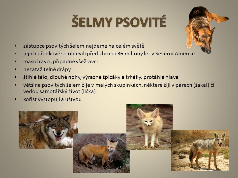 ŠELMY PSOVITÉ zástupce psovitých šelem najdeme na celém světě