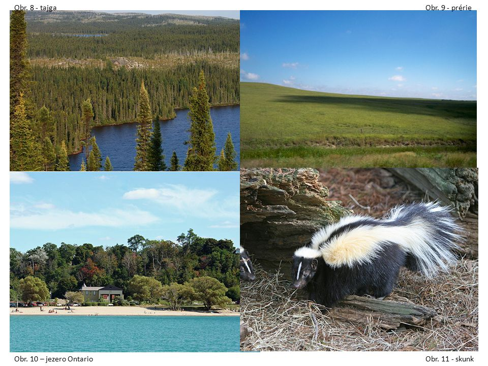 Obr. 8 - tajga Obr. 9 - prérie Obr. 10 – jezero Ontario Obr. 11 - skunk
