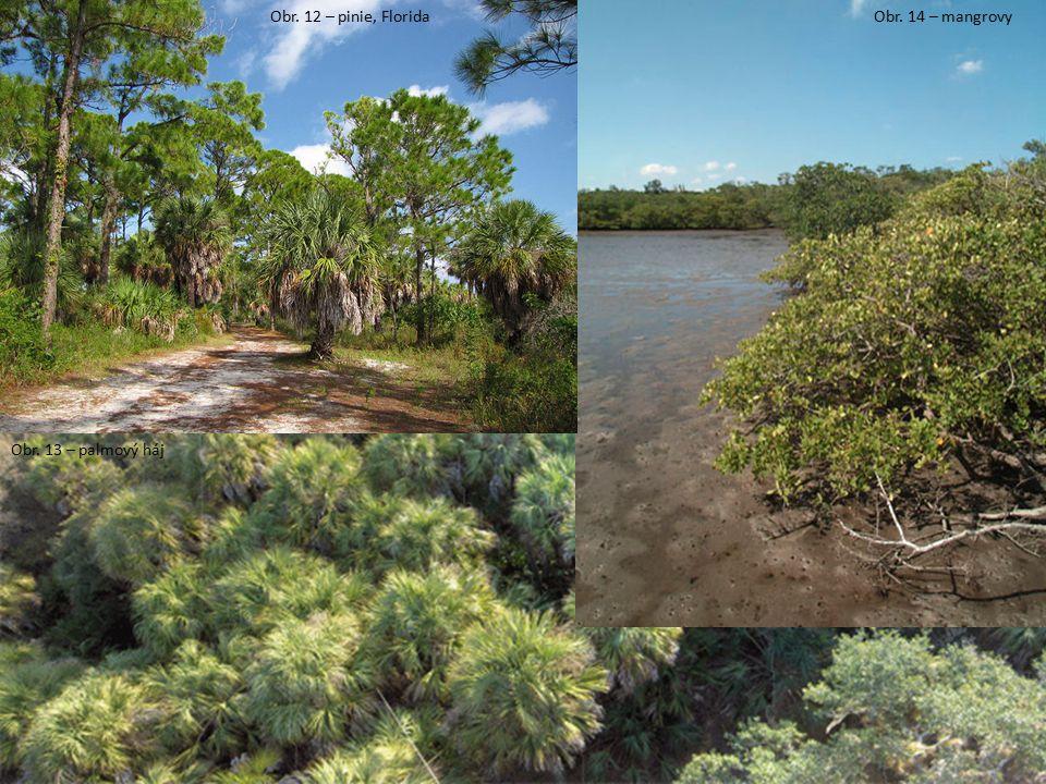 Obr. 12 – pinie, Florida Obr. 14 – mangrovy Obr. 13 – palmový háj