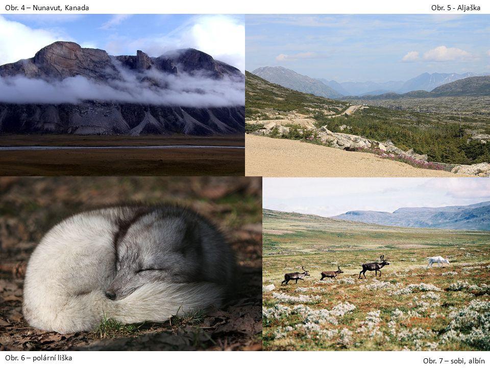 Obr. 4 – Nunavut, Kanada Obr. 5 - Aljaška Obr. 6 – polární liška Obr. 7 – sobi, albín