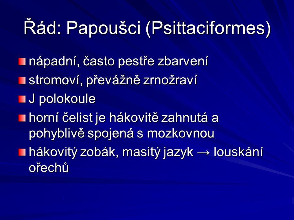 Řád: Papoušci (Psittaciformes)