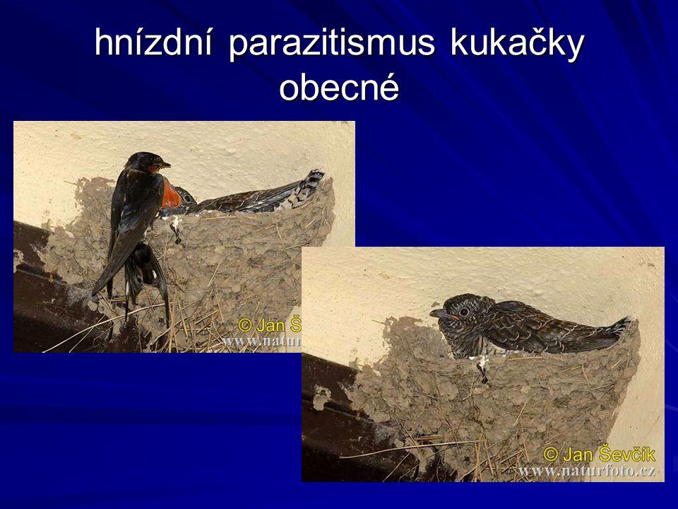 hnízdní parazitismus kukačky obecné