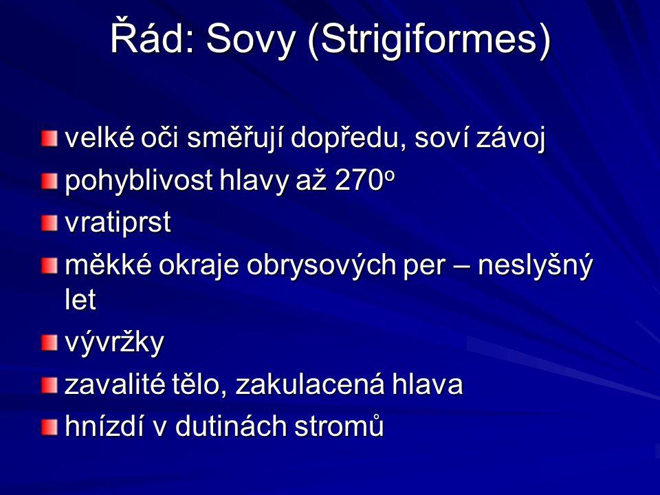 Řád: Sovy (Strigiformes)