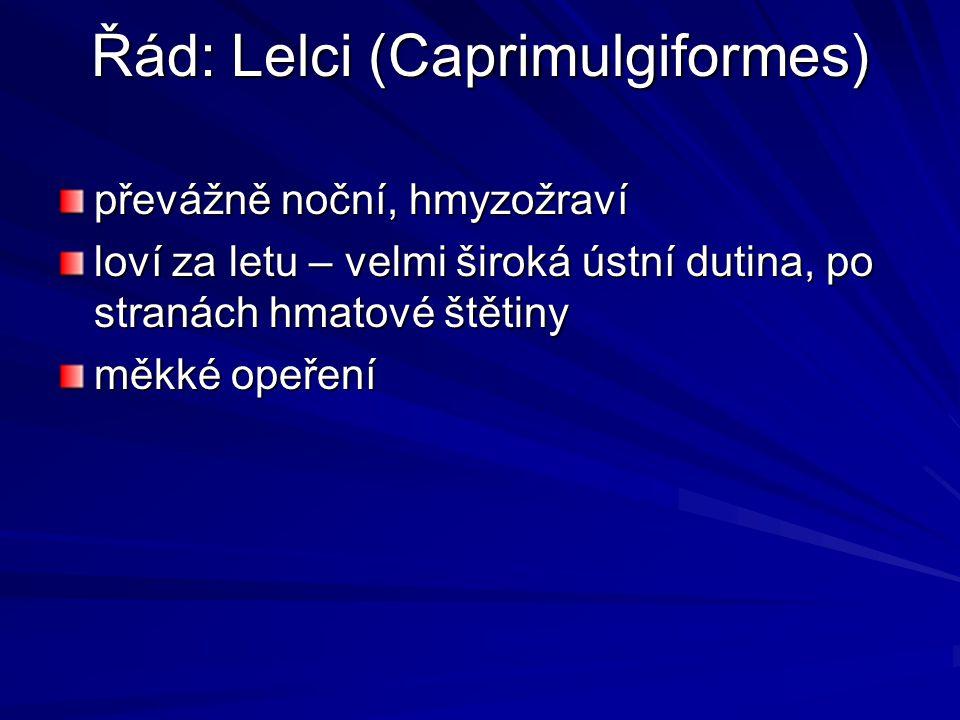 Řád: Lelci (Caprimulgiformes)