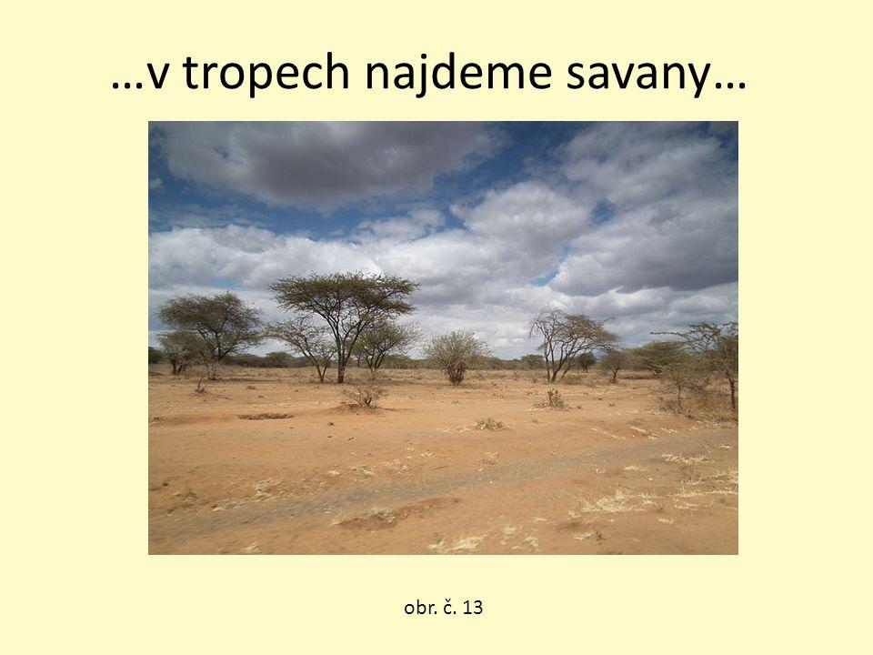 …v tropech najdeme savany…