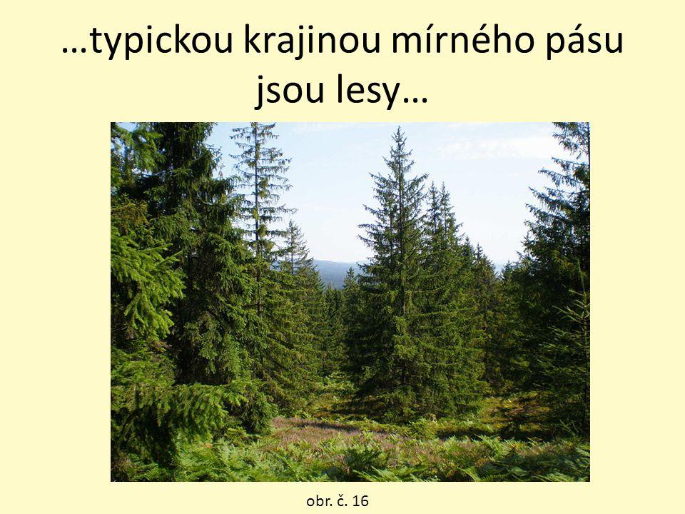 …typickou krajinou mírného pásu jsou lesy…