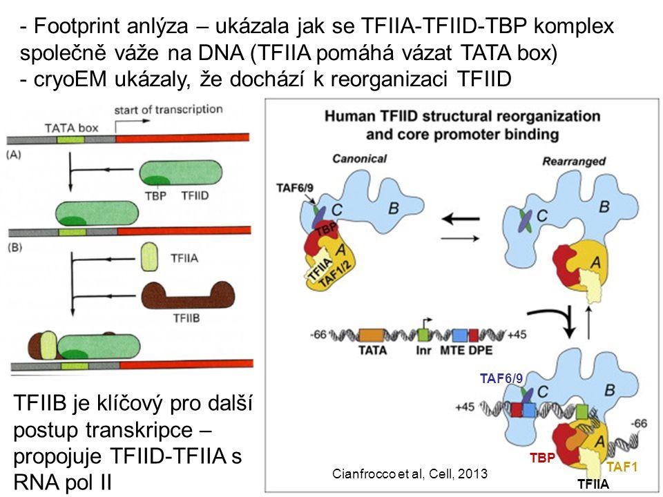 cryoEM ukázaly, že dochází k reorganizaci TFIID
