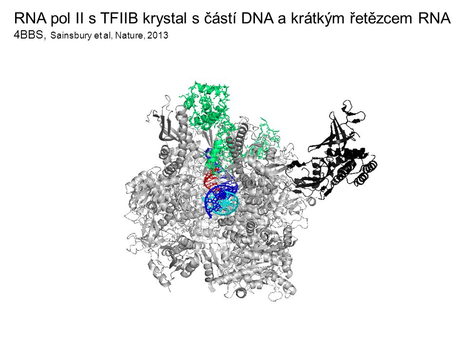 RNA pol II s TFIIB krystal s částí DNA a krátkým řetězcem RNA