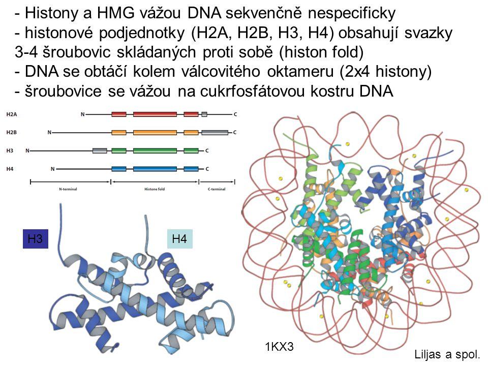 Histony a HMG vážou DNA sekvenčně nespecificky