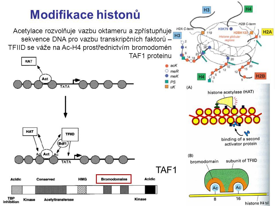 Modifikace histonů TAF1