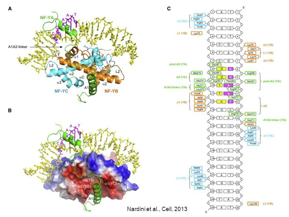 Nardini et al., Cell, 2013