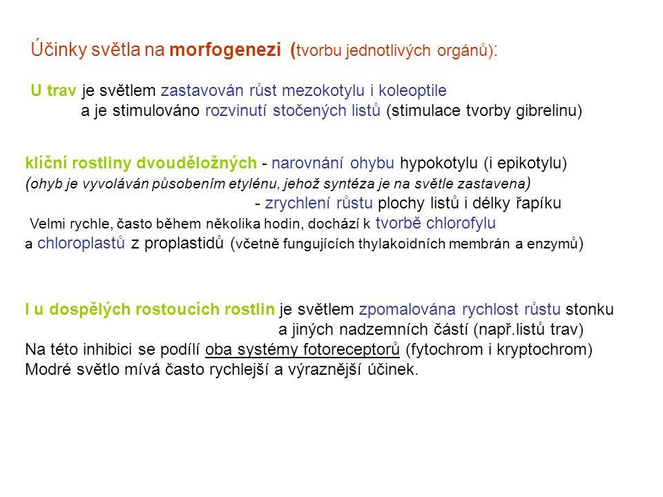 Účinky světla na morfogenezi (tvorbu jednotlivých orgánů):