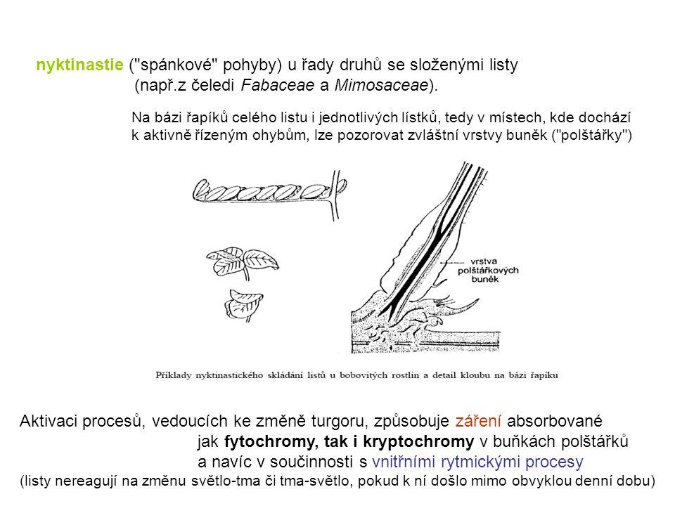 nyktinastie ( spánkové pohyby) u řady druhů se složenými listy