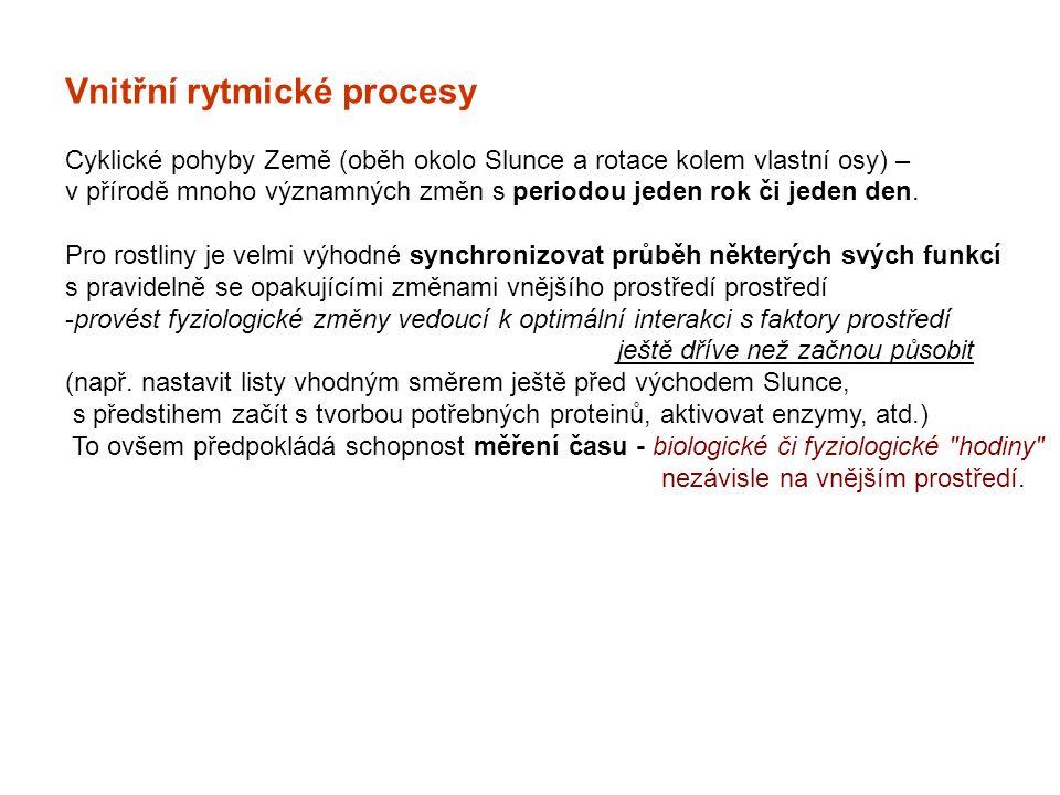 Vnitřní rytmické procesy