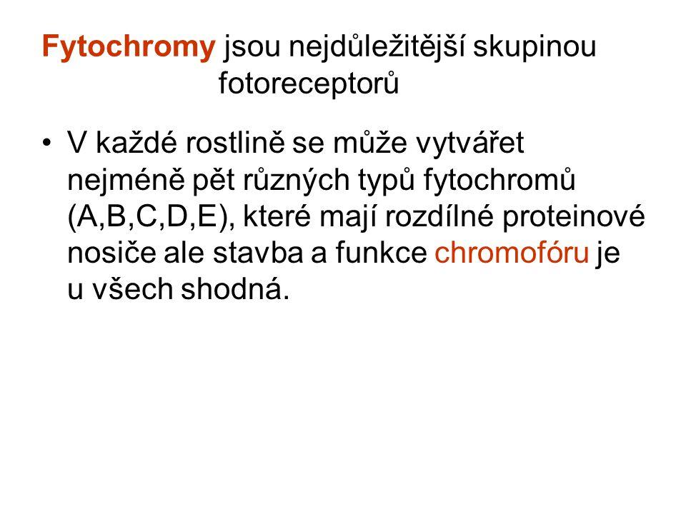 Fytochromy jsou nejdůležitější skupinou fotoreceptorů