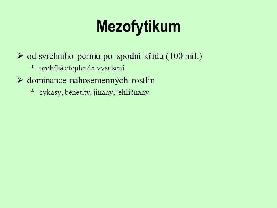 Mezofytikum od svrchního permu po spodní křídu (100 mil.)