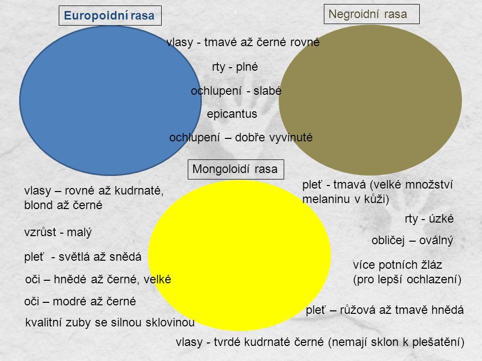 Europoidní rasa Negroidní rasa. vlasy - tmavé až černé rovné. rty - plné. ochlupení - slabé. epicantus.