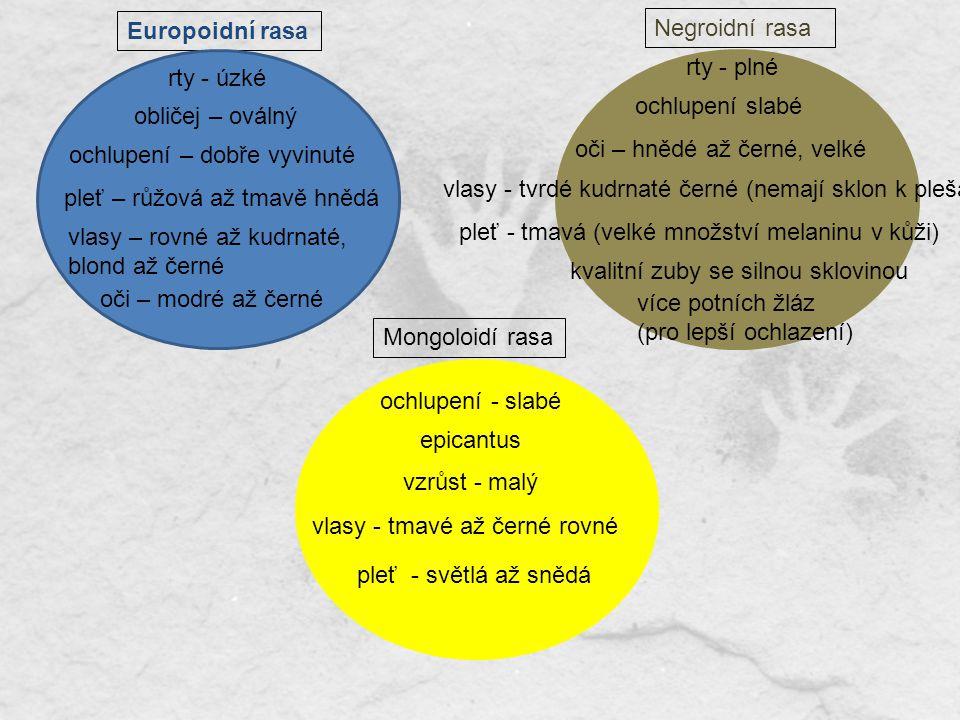 Europoidní rasa Negroidní rasa. rty - plné. rty - úzké. ochlupení slabé. obličej – oválný. ochlupení – dobře vyvinuté.