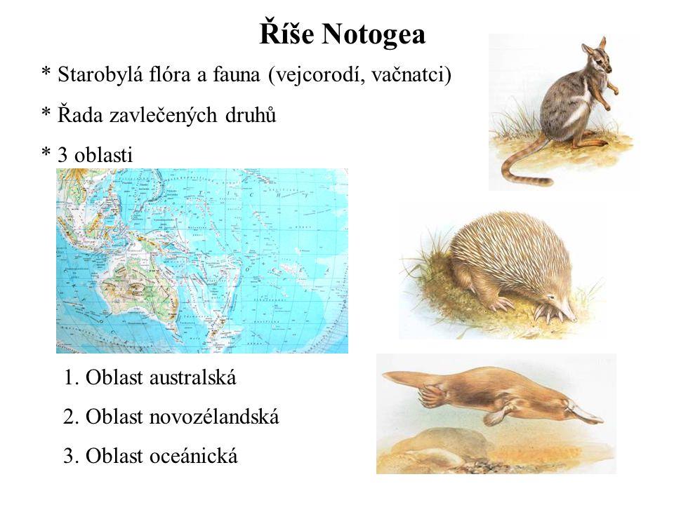 Říše Notogea Starobylá flóra a fauna (vejcorodí, vačnatci)