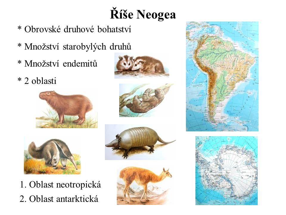 Říše Neogea Obrovské druhové bohatství Množství starobylých druhů