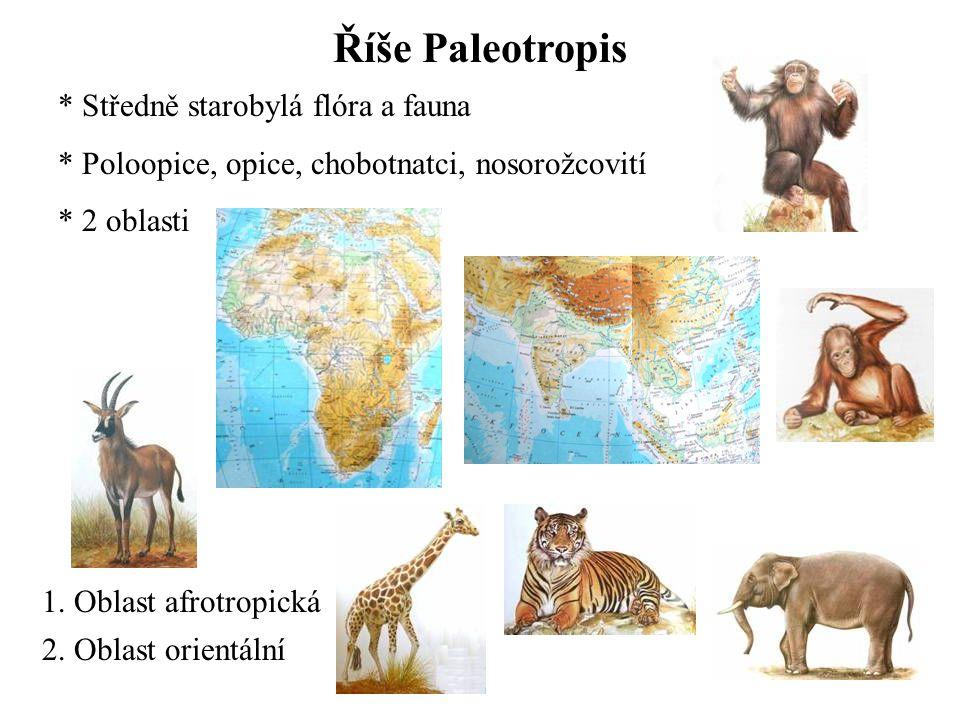 Říše Paleotropis Středně starobylá flóra a fauna