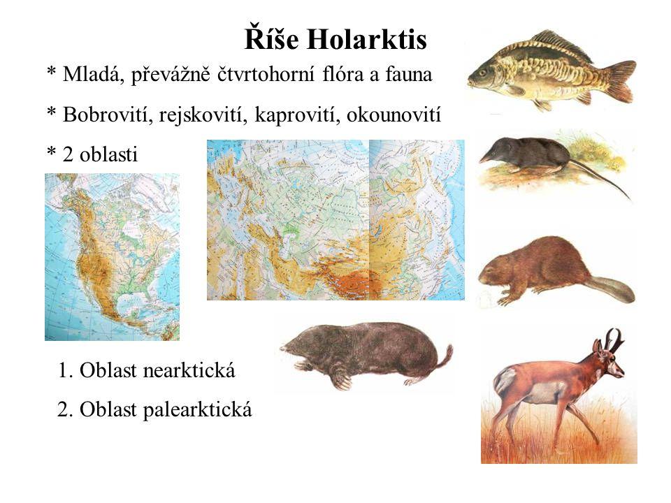 Říše Holarktis Mladá, převážně čtvrtohorní flóra a fauna