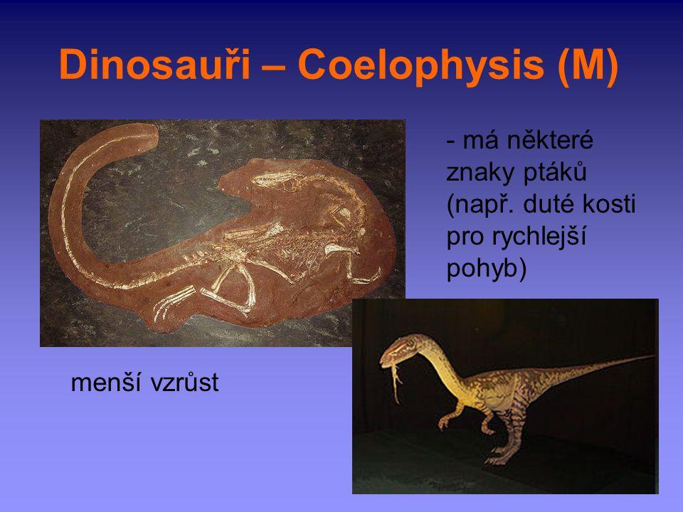Dinosauři – Coelophysis (M)