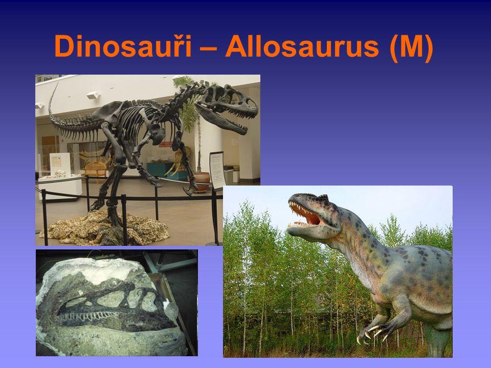 Dinosauři – Allosaurus (M)