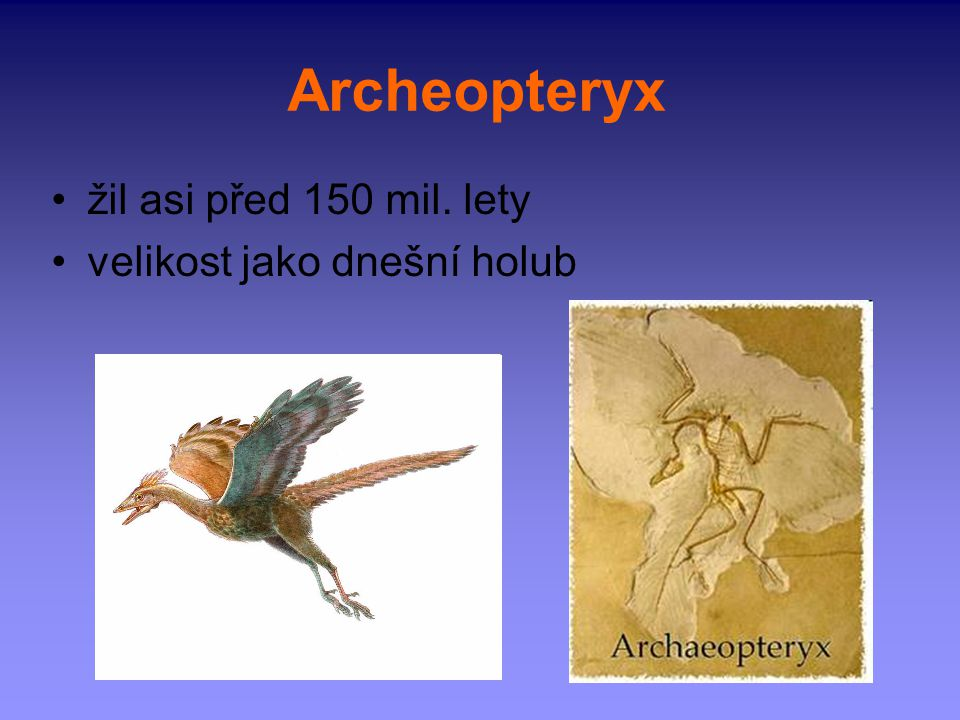 Archeopteryx žil asi před 150 mil. lety velikost jako dnešní holub