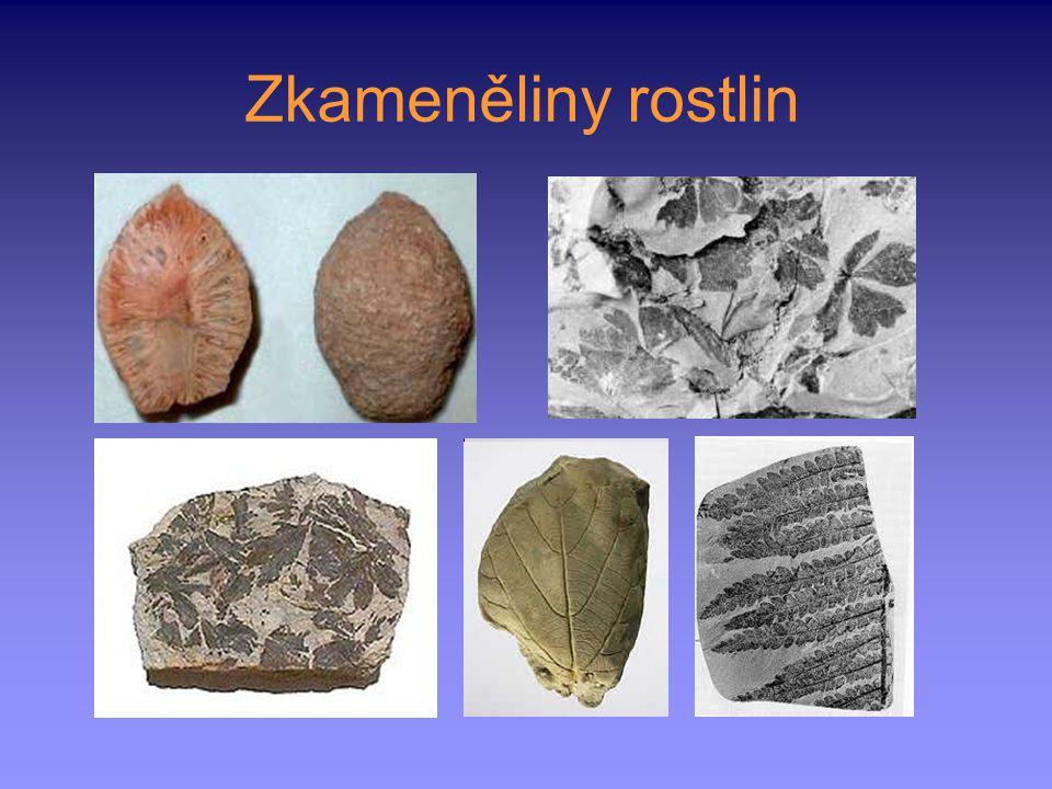 Zkameněliny rostlin