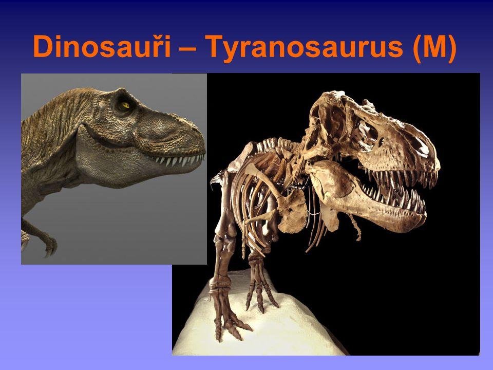 Dinosauři – Tyranosaurus (M)