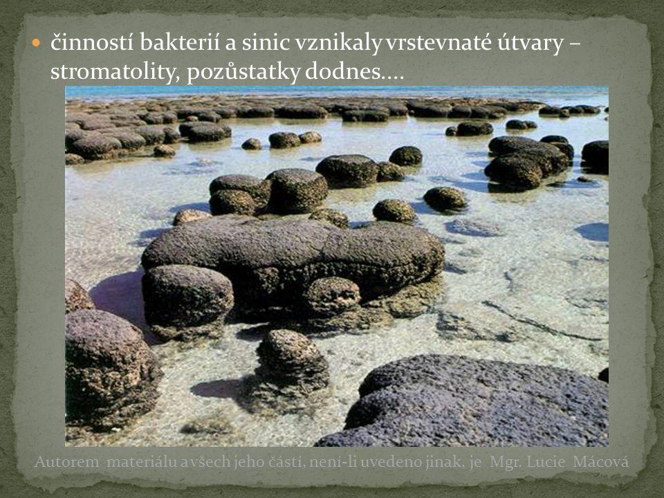 činností bakterií a sinic vznikaly vrstevnaté útvary – stromatolity, pozůstatky dodnes....