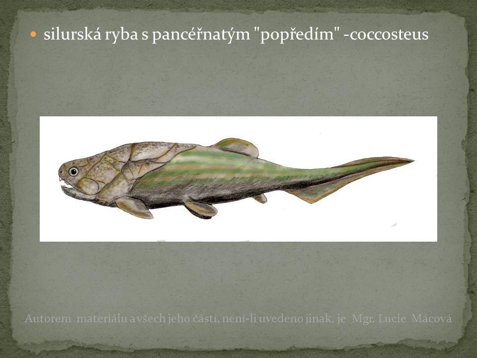 silurská ryba s pancéřnatým popředím -coccosteus