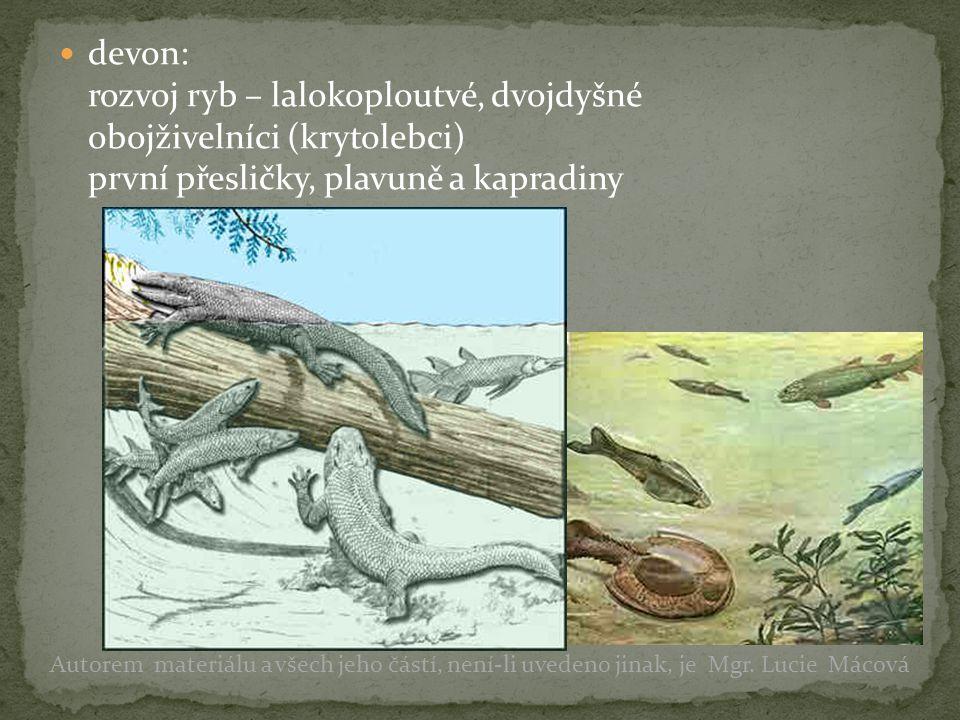 devon: rozvoj ryb – lalokoploutvé, dvojdyšné obojživelníci (krytolebci) první přesličky, plavuně a kapradiny