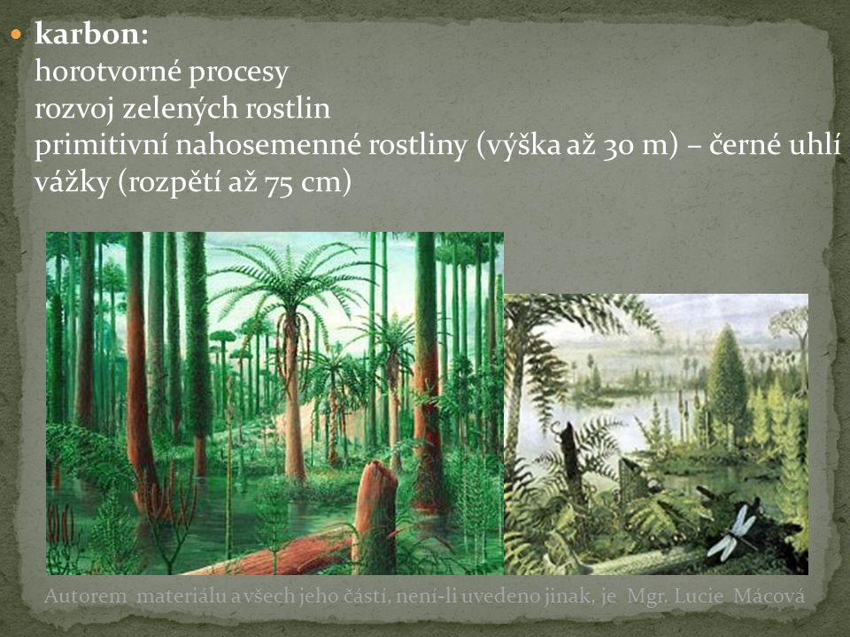 karbon: horotvorné procesy rozvoj zelených rostlin primitivní nahosemenné rostliny (výška až 30 m) – černé uhlí vážky (rozpětí až 75 cm)
