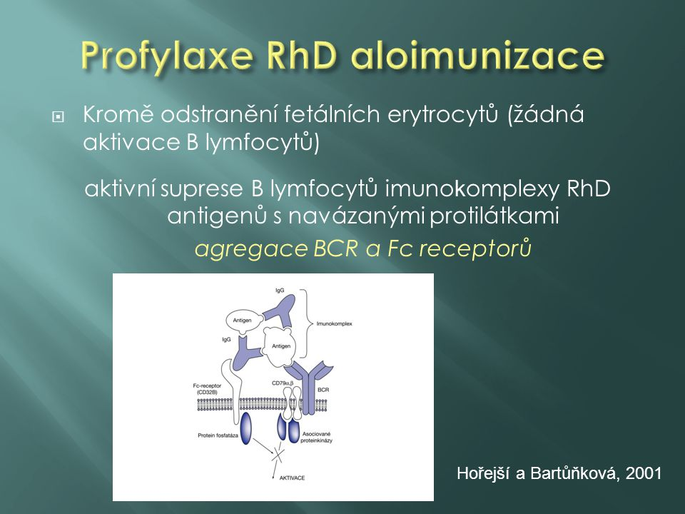 Profylaxe RhD aloimunizace